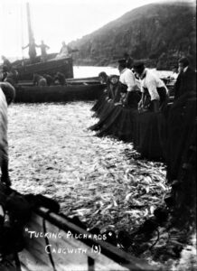 Cadgwith harbour with fishermen, fishing boats and a tucking net full of pilchards.
