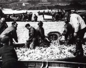 The largest catch of pilchards in St. Ives when an estimated 13 million fish were caught in just one day