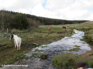 Bodmin Moor - Horses